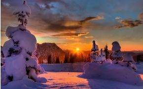 Обои зима, лес, солнце, лучи, свет, снег, елки