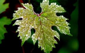Картинка вода, капли, макро, природа, зеленый, листок, macro