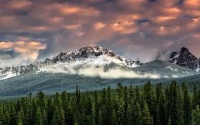 Картинка лес, небо, облака, снег, горы, туман, вершины, ели, обои от lolita777