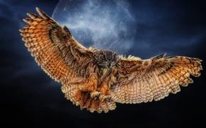 Картинка сова, крылья, Луна, Photoshop