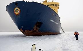 Обои пингвин, лед, ледокол