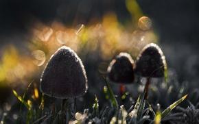 Картинка свет, природа, грибы