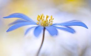 Обои тычинки, природа, лепестки, цветок, стебель