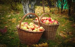 Картинка осень, яблоки, сад, корзины
