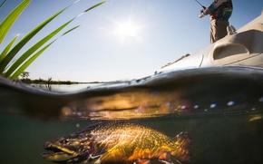 Картинка Fish, man, fishing, boarding