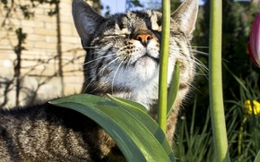 Картинка кот, солнце, цветы, животное, стебель, лежит, греется
