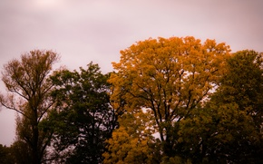 Картинка Sky, Cloudy, Autumn, Forest, Trees, Leaves