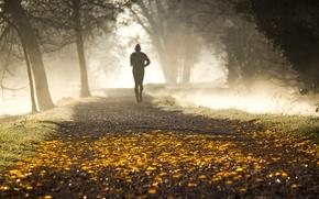 Обои осень, парк, утро, туман