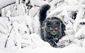 Картинка Взгляд, Снег, Кот