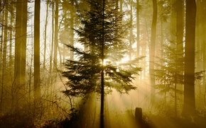 Картинка свет, лес, природа