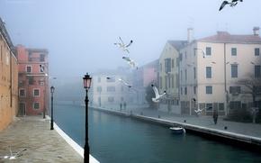 Картинка птицы, город, Венеция