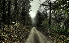 Картинка дорога, грусть, осень, 154