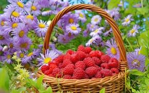 Картинка трава, цветы, малина, корзина, ягода, красная, астры