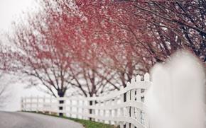 Картинка листья, природа, дерево, боке