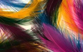 Обои яркие, цвета, перья, текстура