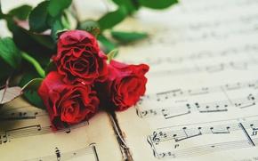 Картинка ноты, розы
