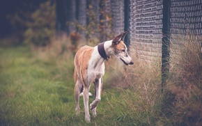Картинка трава, друг, собака, ограждение