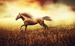 Картинка пшеница, поле, камни, фон, конь, земля, краски, рисунок, хвост, пастель, холст, тона, копыта, свобода духа