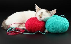 Обои красный, клубки, голубой, кот