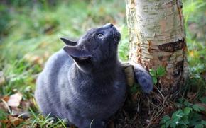 Картинка кошка, трава, дерево, земля, ствол