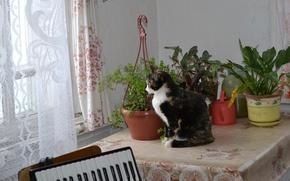 Картинка кошка, настроение, муся, трёхцветная, жопульдра