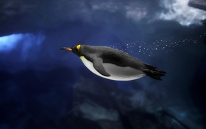 Картинка животные, океан, ледник, пингвин, антарктика