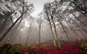 Картинка туман, осень, лес, природа