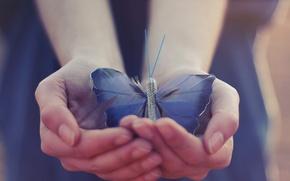Картинка бабочка, крылья, руки
