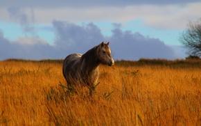 Картинка grass, field, horse, countryside, wildlife
