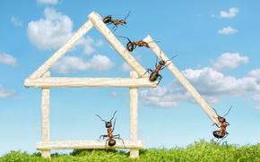 Обои бревна, макро, муравьи, обои от lolita777, работа, мох, стройка, домик, насекомые