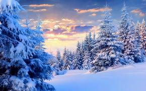 Обои зима, небо, снег, пейзаж, природа, white, sky, landscape, nature, sunset, winter, snow