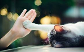 Обои огни, лапа, рука, Кошка, лежит, ладонь, боке