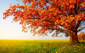 Картинка поле, осень, трава, листья, дерево