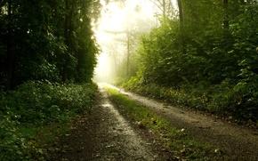 Картинка дорога, лес, природа, туман