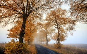 Картинка Autumn, morning, foggy