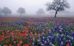 Обои туман, деревья, цветы, поле