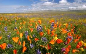 Обои цветы, поле, горы, облака