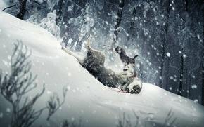 Картинка снег, волк, Заяц