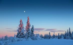 Картинка зима, лес, небо, снег, деревья, луна, вечер