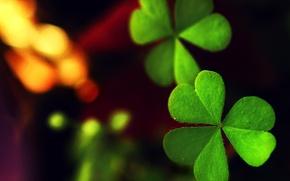 Картинка зелень, макро, лист, листик, клевер