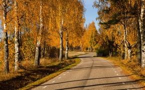 Картинка дорога, осень, лес, листья, деревья, природа, парк, colors, colorful, forest, road, trees, nature, park, autumn, …