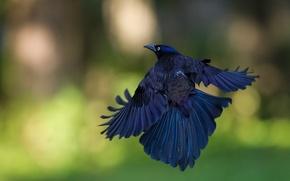 Картинка полет, блики, фон, птица