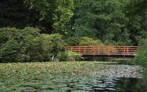 Картинка зелень, лес, мост, green, Озеро, forest, bridge, Lake