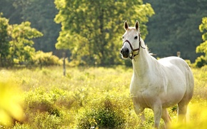 Картинка конь, лошадь, луг