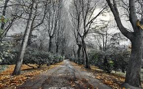 Обои дорога, осень, деревья, пейзаж