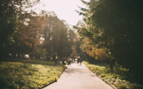 Картинка осень, солнце, парк, дорожка, прогулка