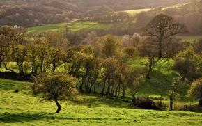Картинка зелень, деревья, природа, склоны, поля, весна