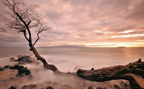Картинка море, дерево, вечер