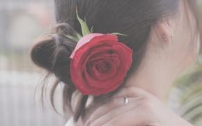 Картинка цветок, девушка, настроение, волосы, роза, брюнетка, прическа, затылок