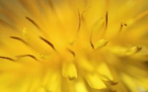 Картинка цветок, макро, крупный план, жёлтый, тычинки